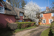 Blackthorn blossom and pretty country cottages, Grundisburgh, Suffolk, England