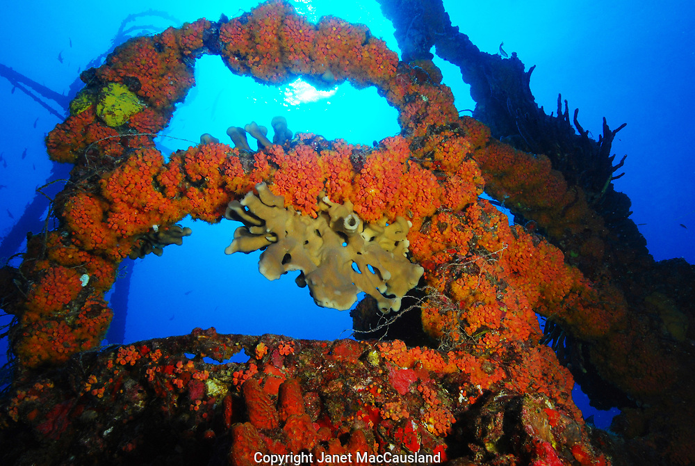 The wreck of the Duane, a 327' Coast Guard cutter which sunk in 1987, is encrusted in orange Cup Corals, sponges & much more Florida fishes & marine life. It is a popular SCUBA dive site now, and judging by the fish line caught on it, a favorite fishing spot also.