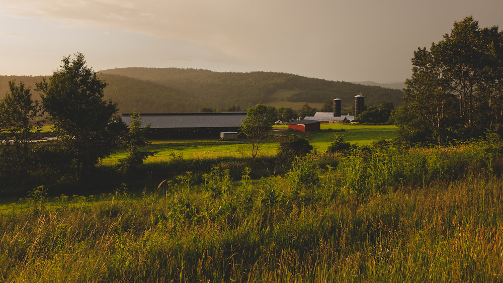 Afternoon light striking the lush landscape at Glendale Farm in Vermont.