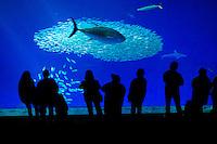 The Monterey Aquarium in Monterey CA, Monday Jan 25, 2010.Photo Brian Baer
