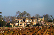 Vineyard. Chateau Soutard. Saint Emilion, Bordeaux, France