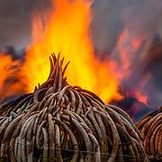Kenya Burn