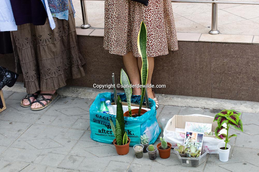 Moldova Chisinau woman selling plants in the streets of Chisinau