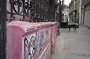 A street dog roams a sidewalk of Cerro Alegre, Valparaiso, Chile.