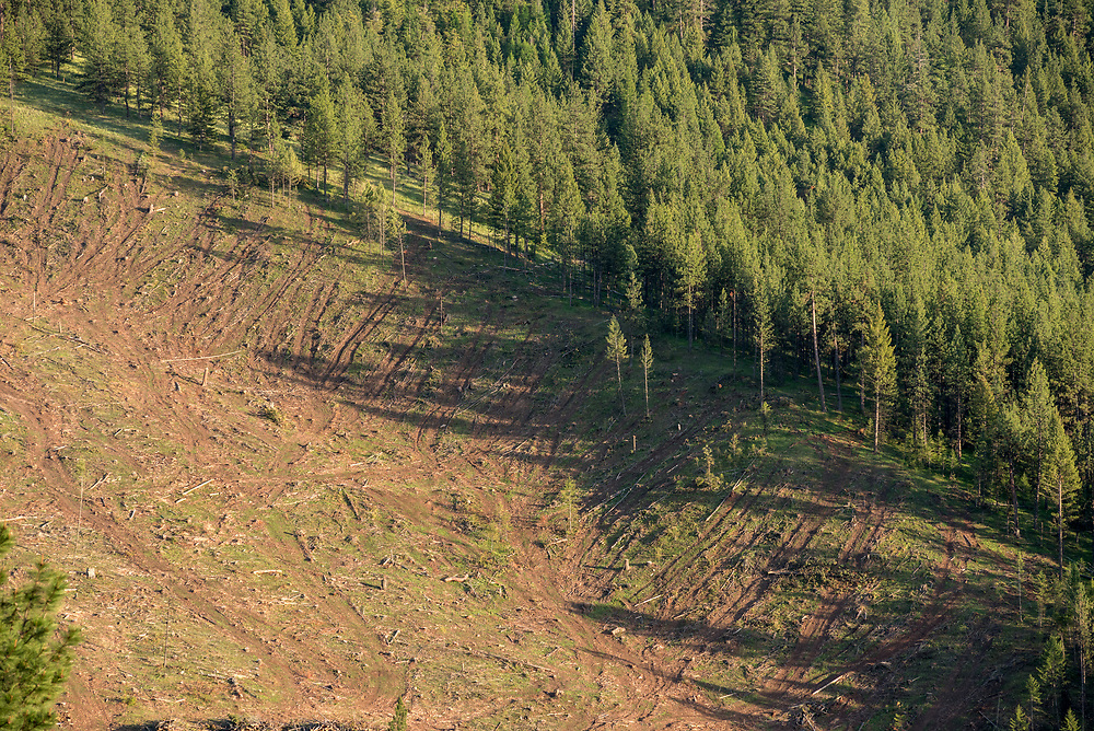 Logged forest on Hancock Timber Resource Group land in Wallowa County, Oregon.