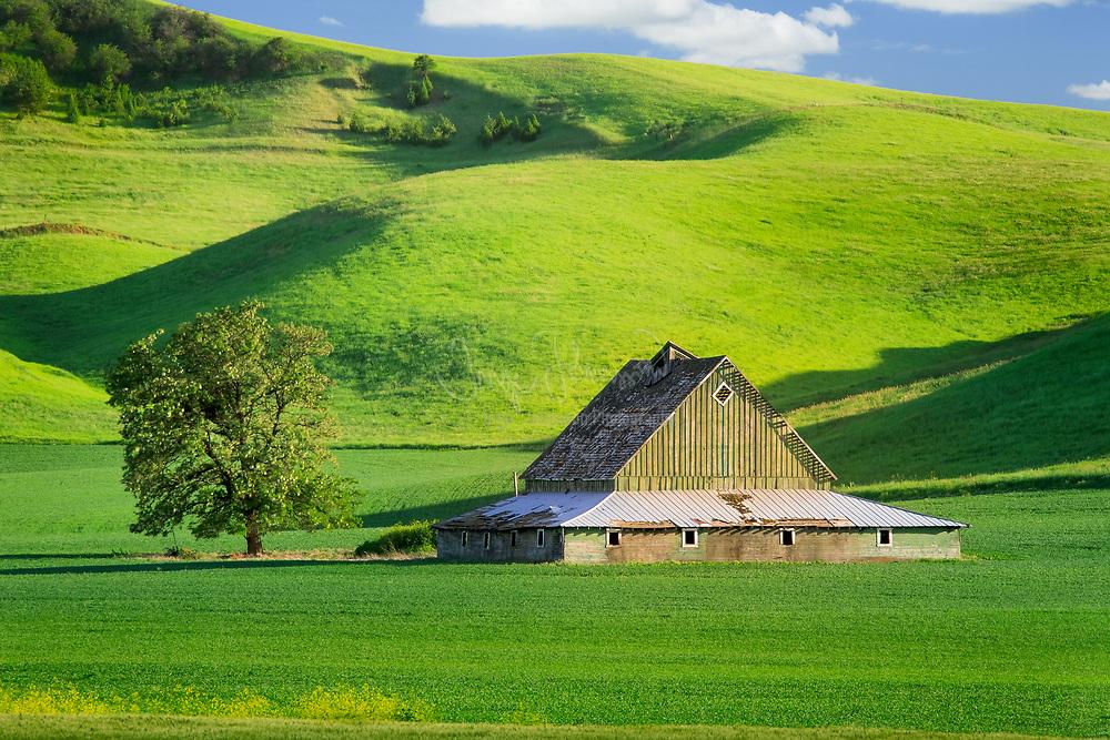 Barn in Palouse area of eastern Washington state