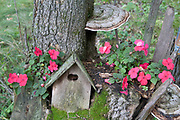 Birdhouse nestled into tree stump surrounded by moss, pink impatiens and large tree fungi growths. Clitherall Minnesota MN USA