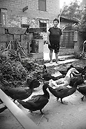 Black and white picture of a woman standing in front of her yard and watching some gooses crossing the track.Yangshuo, guanxi, china