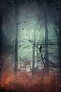 Bird on a branch on a misty winter day - textured photograph<br /> <br /> Prints: http://www.redbubble.com/people/dyrkwyst/works/17537688-endurance?ref=recent-owner