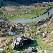 Sheep grazing at Gap of Dunloe, Ireland