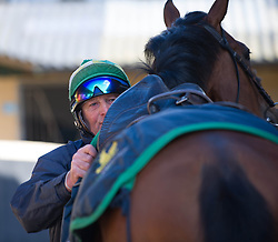 © Licensed to London News Pictures. 22/03/2014<br /> <br /> Middleham, North Yorkshire<br /> <br /> A jockey adjusts the tack on his horse during exercise at the Mark Johnston stables in Middleham, North Yorkshire. Race horses have been trained in Middleham for over 200 years using the extensive gallops on the high moor. There are currently 15 stables based around the small Yorkshire village.<br /> <br /> Photo credit : Ian Forsyth/LNP