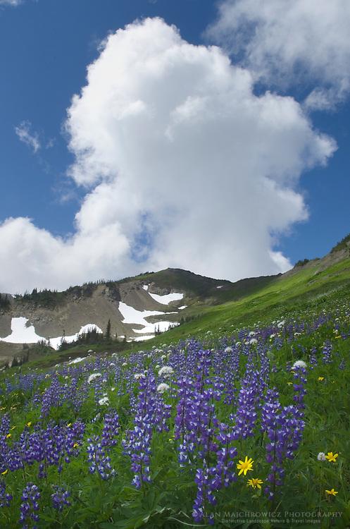 Wildflowers meadows on Skyline Divide, Mount Baker Wilderness North Cascades Washington