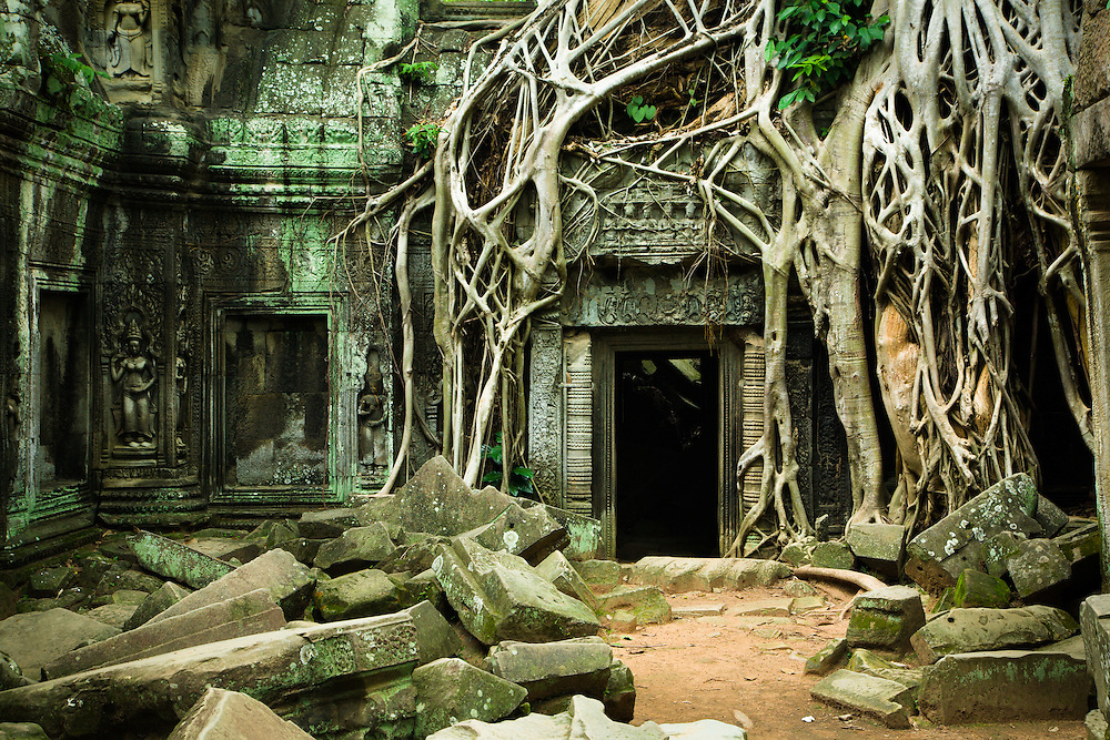 Tree roots from a massive old tree growing on the ruins of Ta Prohm form around a stone doorway which is still usable. Piles of stone lie in heaps as the forest naturally takes over the temple.