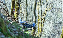 THEMENBILD - ein Mann sitzt auf einer Bank im Wald, aufgenommen am 07. April 2018, Kaprun, Österreich // a man is sitting on a bench in the forest on 2018/04/07, Kaprun, Austria. EXPA Pictures © 2018, PhotoCredit: EXPA/ Stefanie Oberhauser