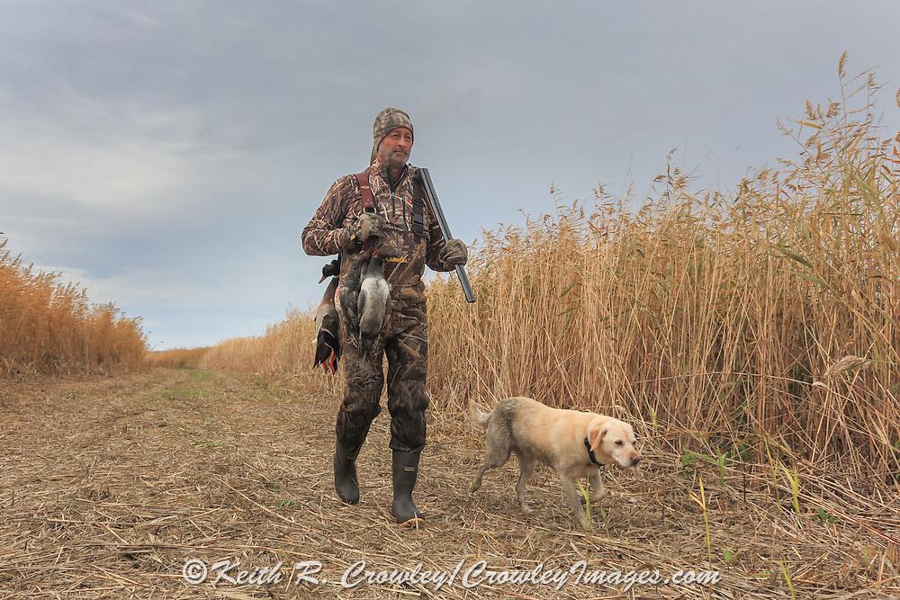 Successful waterfowl hunter walks with his yellow Lab.