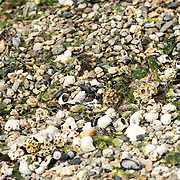 Coral and Sea Shells on the Beach at Ushuaia, Argentina, the most southernmost town in the world.