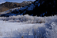 Hoar frost in the morning along the Salmon River