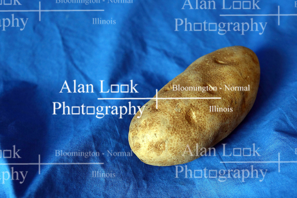 18 February 2016:   Studio - Potato on blue #023.  A single baking potato shot in a studio on a blue background.