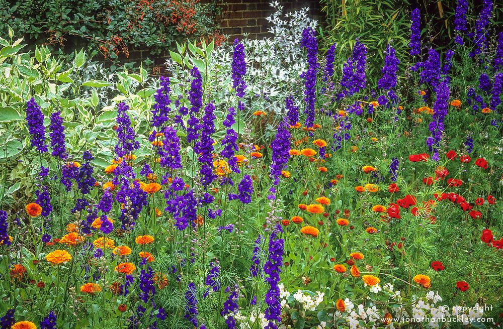 Consolida 'Venus Blue' (Larkspur), Calendula officinalis 'Prince Orange', Papaver commutatum 'Ladybird', Cornus alba 'Elegantissima' in a border in the Solar Garden at Great Dixter