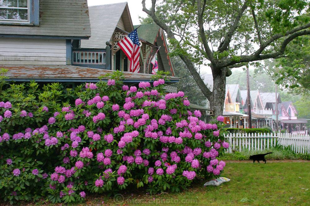 In the town of Oak Bluffs on Martha's Vineyard, Massachusetts.
