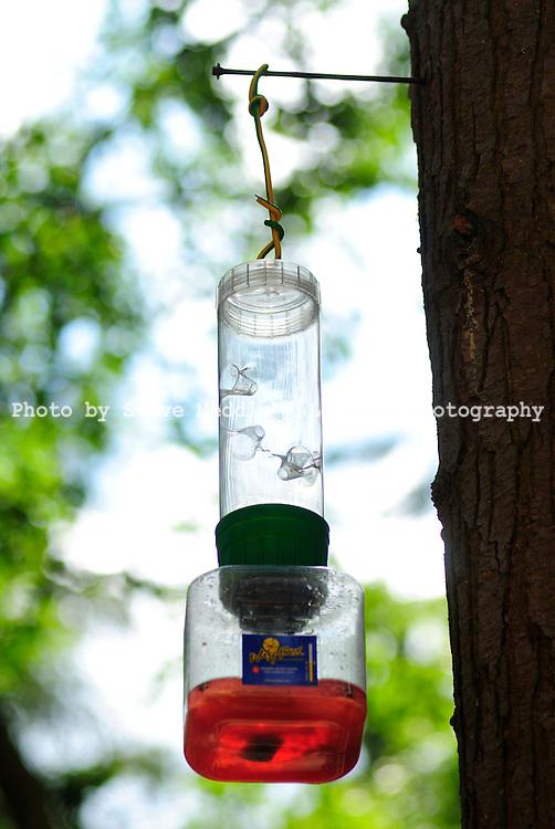 Wasp Catcher - Aug 2009
