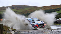 Hyundai Thiery Neuville on the Sweet Lamb stage during day three of the DayInsure Wales Rally GB.