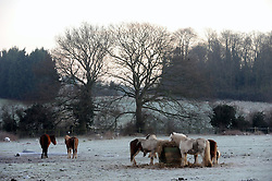 © Licensed to London News Pictures. 16/02/2016<br />