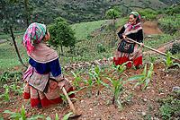 Vietnam. Haut Tonkin. Region de Bac Ha. Travaux des champs. Ethnie Hmong fleur. // Vietnam. North Vietnam. Bac Ha area. Fields work. Flower Hmong ethnic group.