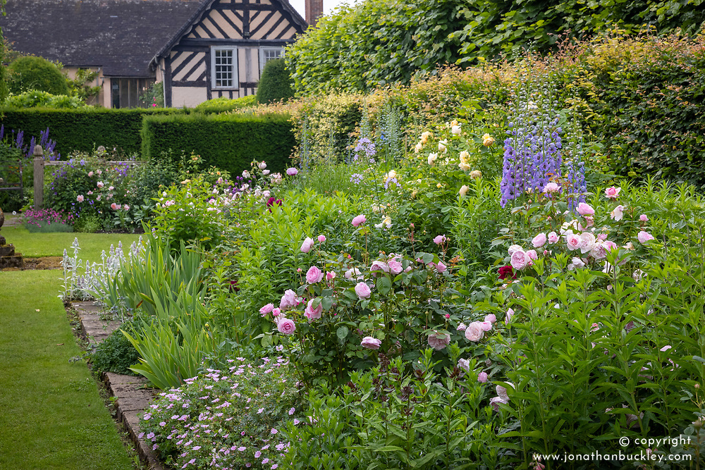 Roses in a border at Wollerton Old Hall, Shropshire