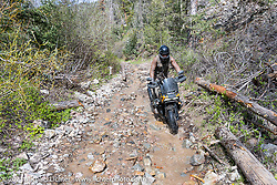 Danger Dan Hardick riding his 2-week old Harley-Davidson Pan-America adventure bike on a trail just outside Red River, NM, USA. Sunday, May 30, 2021. Photography ©2021 Michael Lichter.