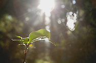 Ray of sunlight - Point Defiance Park, Tacoma, WA