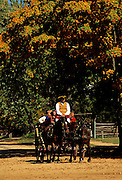 Image of a horse and buggy ride on Duke of Gloucester Street in Colonial Williamsburg, Virginia, east coast by Randy Wells