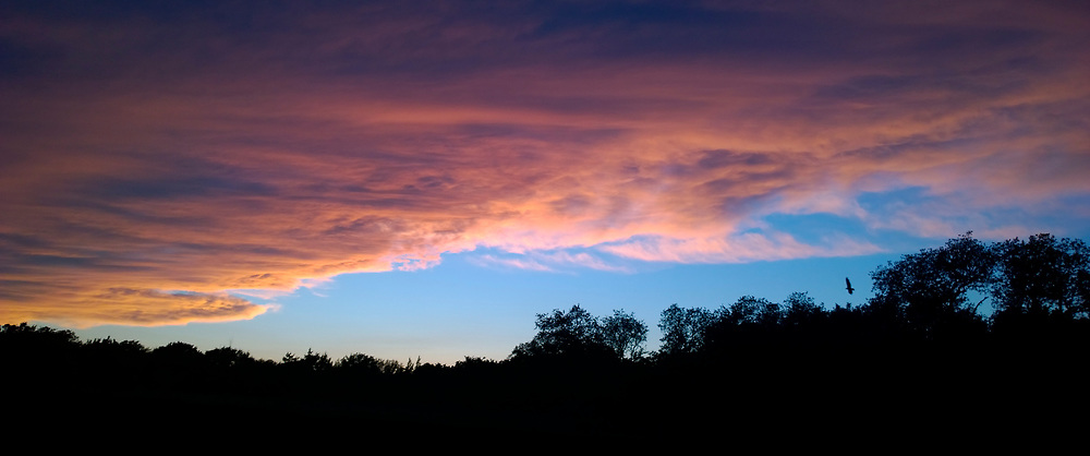 A soft sunset of orange and violet on top of a baby blue clear sky over the silhouette of a long ridge of trees with a bird gliding there.