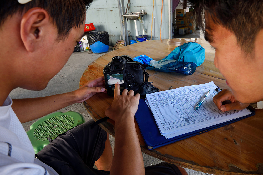 """Verifying data collected of the Indo-Pacific humpback dolphin, Chinese white dolphin, Pink dolphin, Sousa chinensis in Tai O (大澳), western side of Lantau Island, Hong Kong, China. Near Threatened, IUCN Red List, listed in the Convention on International Trade in Endangered Species of Wild Fauna and Flora (CITES), """"Grade 1 National Key Protected Species"""" in mainland China. There are four major populations in mainland China, including Pearl River Estuary, Xiamen, Beibu Bay and Leizhou. The largest population is found in the coastal areas of Pearl River Estuary, including the waters of Hong Kong and Macau. Only 61 individuals in Hong Kong.<br /> This Image is a part of the mission Wild Sea Hong Kong (Wild Wonders of China)."""