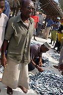 Fishermen autctioning their catch on the beach, Nungwi, Zanzibar, Tanzania