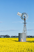windmill and water tank in field of flowering canola during springtime near Cressy, Victoria, Australia <br />