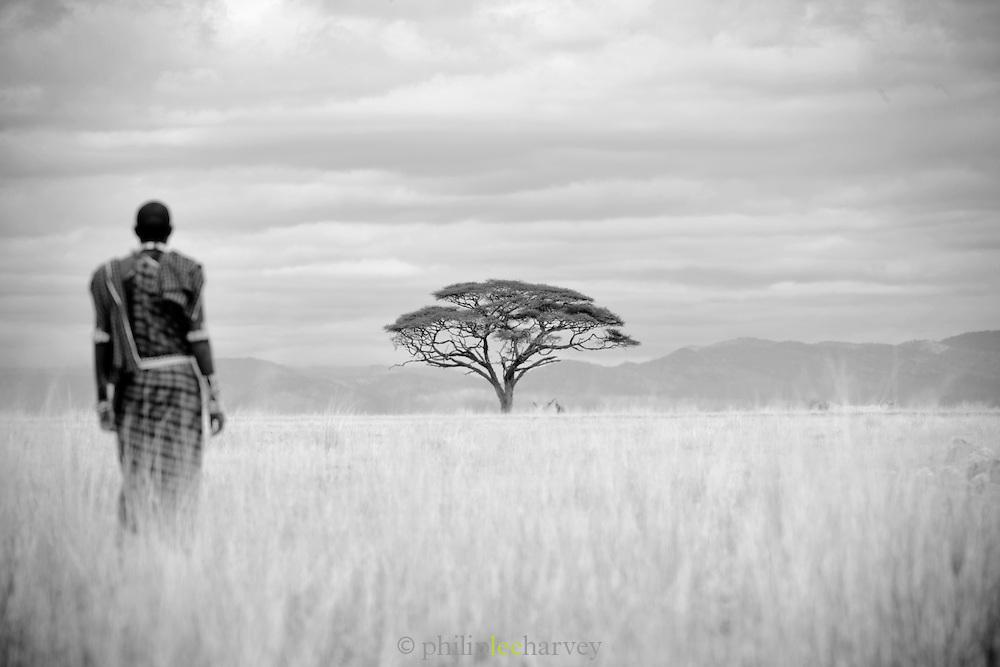 A Maasai man walks in the savannah of Amboseli National Park, Kenya