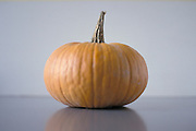 still life of pumpkin