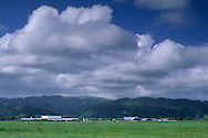 Farmlands in the Eel River valley, near Ferndale, Humboldt County, CALIFORNIA