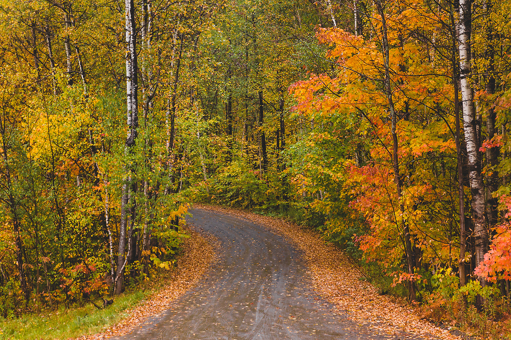 A winding dirt road in the foliage laden hills of Stowe, VT.