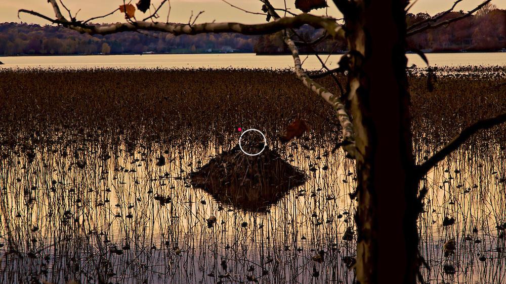 Beaver Den, Little Africa Wildlife View Lake Lemon