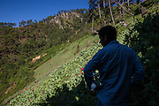 El CALVARIO, MEXICO - AUGUST 5, 2015: A man in an opium poppy field hidden in a gully in the mountains close to the Chilpancingo city, the capital of the state of Guerrero, Mexico.  Rodrigo Cruz for The New York Times