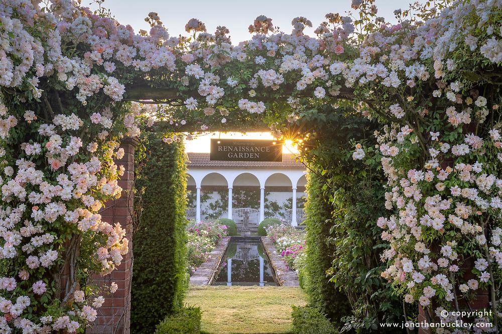 Entrance to The Renaissance Garden at dawn with Rosa 'Phyllis Bide'