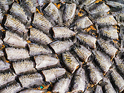 17 MAY 2013 - BANGKOK, THAILAND:   Fish drying in the sun in a street in Bangkok.   PHOTO BY JACK KURTZ