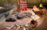 USA, Alaska,A man reads about a Tlinget fish camp diorama at the Southeast Alaska Discovery Center in downtown Ketchikan.MR