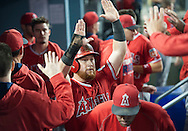 The Angels' Kole Calhoun celebrates in the dugout after scoring in the fourth inning during the Angels' Freeway Series game against the Dodgers Thursday night at Dodger Stadium.<br /> <br /> ///ADDITIONAL INFO:   <br /> <br /> freeway.0401.kjs  ---  Photo by KEVIN SULLIVAN / Orange County Register  --  3/31/16<br /> <br /> The Los Angeles Angels take on the Los Angeles Dodgers at Dodger Stadium during the Freeway Series Thursday.<br /> <br /> <br />  3/31/16