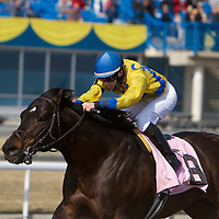 Thoroughbred Racing 2011 - Woodbine