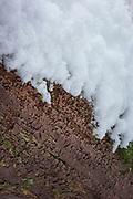 The ceramic fungus (Xylobolus frustulatus) on underside of old fallen oak tree (Quercus robur) in snow , Gauja National Park (Gaujas Nacionālais parks), Latvia Ⓒ Davis Ulands | davisulands.com