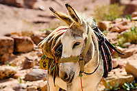 Petra is Jordan's most visited tourist attraction. Mule.