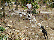 Anxious for their next meal, a group of puppies follows the caretaker carrying their food.